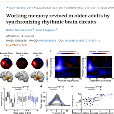 Working memory revived in older adults by synchronizing rhythmic brain circuits neurofeedback