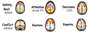 Brain Networks as determined by fMRI