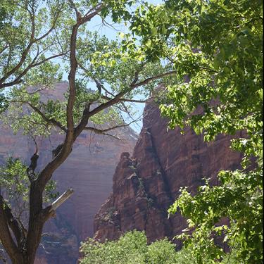 Bright Zyon Canyon shows path with neurofeedback