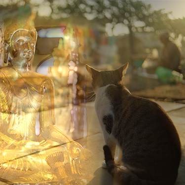 Lonely Cat with Buddha in background