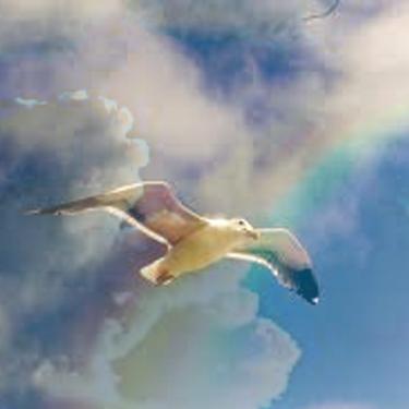Jonathan Livingston Seagull with Rainbow showing freedom through neurofeedback training